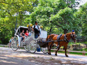 horse-and-carriage-central-park